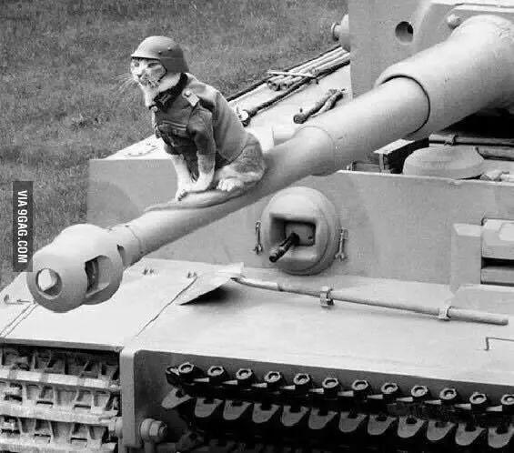 Panzercat on a Tiger I.