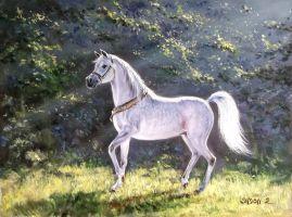 Arabian thoroughbred by Zoltan Simon