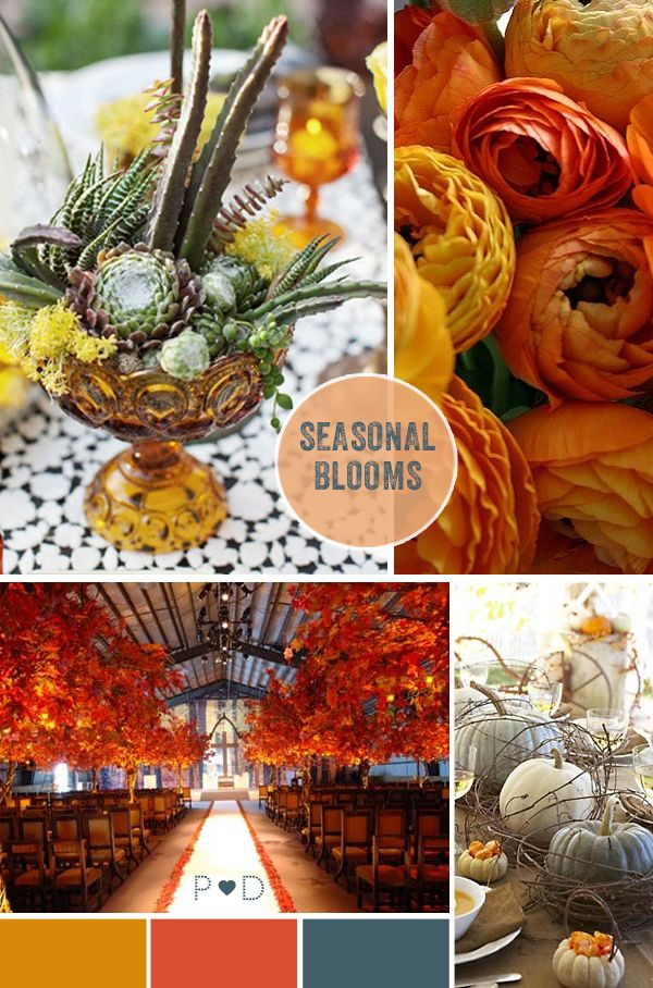 Autumn, Autumnal, Fall, seasonal, rustic, organic, blooms, flowers, seasonal flowers, pumpkins, dahlias, ranunculus, succulents, cactus, orange, Falling For AutumnColors Pallets, Autumn Flower, Beautiful Colours, Colors Schemes, Seasons Flower, Autumn Inspiration, Cactus, Autumn Colors Palettes, Colors Inspiration