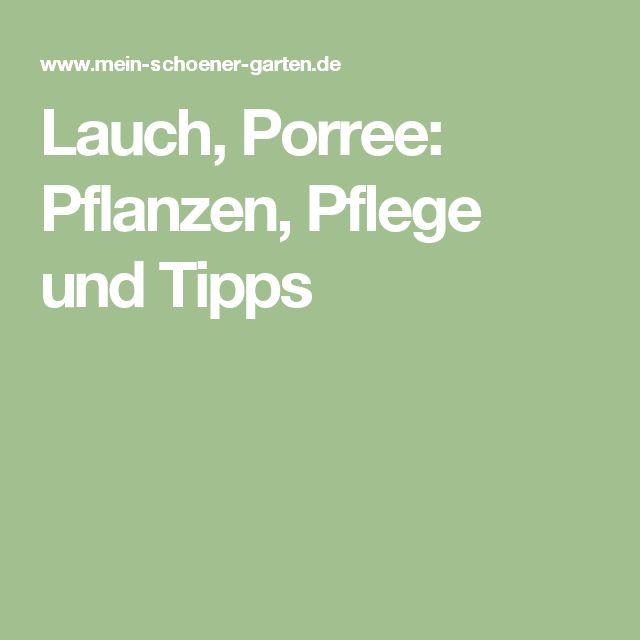 Lauch, Porree: Pflanzen, Pflege und Tipps