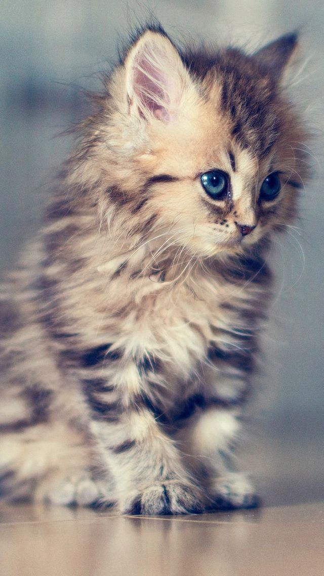 Kitten Bing Images Kittens Cutest Cute Animals Cats And Kittens