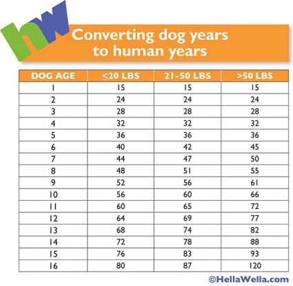 How old is your dog in human years? (Hint 1 year doesn't