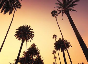 Fotobehang Californië - palmbomen