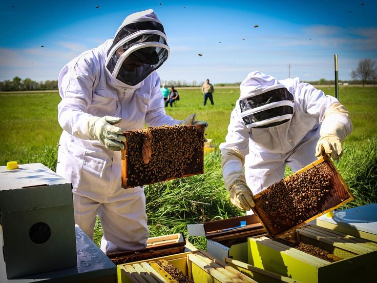 Lakota youth hope beekeeping will provide opportunity for the Sicangu Oyate.