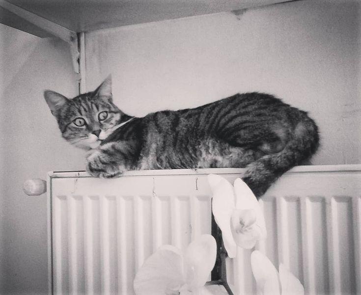 """0 aprecieri, 1 comentarii - Floraria Dorothy's (@florariadorothys) pe Instagram: """"Sunday mode.. #grigore #catintheflowershop #napocats #catsofcluj #clujcats #cluj #clujnapoca…"""""""