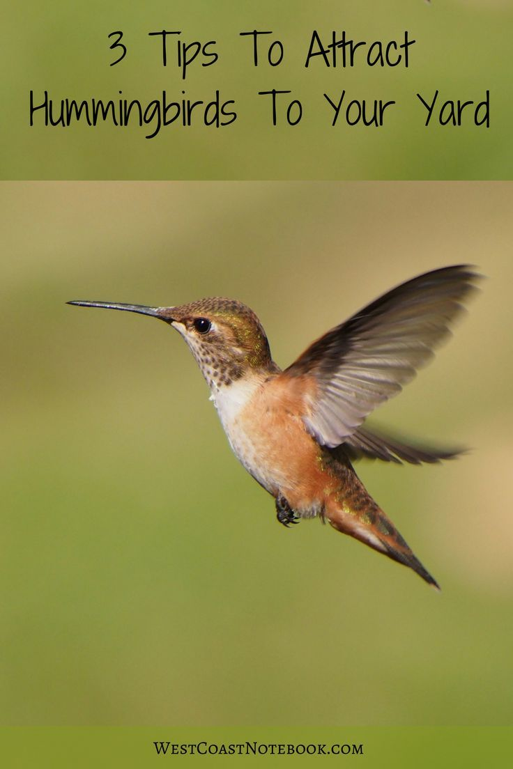 Want more hummingbirds in your garden? Here are some ideas