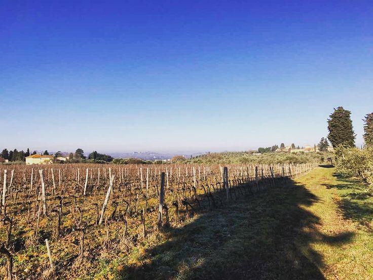 Winter vines at Villa Medicea di Lilliano