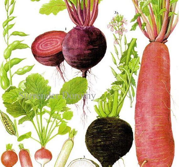 34 best images about Plants on Pinterest | Okra, Plants ...