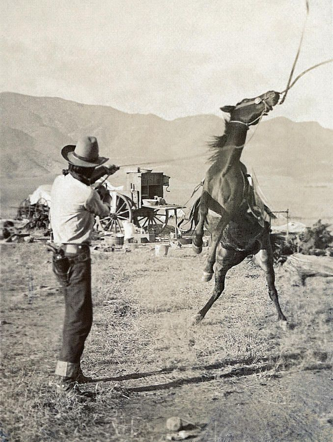 Texas: Cowboy, C1910 Photograph.. a cowboy holding a rope around the neck of a bucking bronco on a ranch in Texas