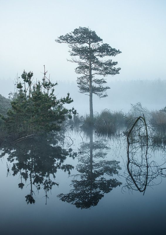 Trees Reflected at Dawn in Nationalpark Thy