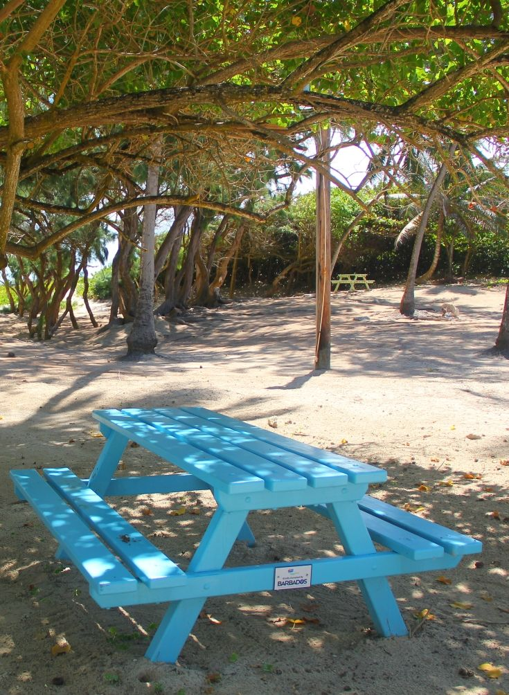 Silver Sands beach in Barbados is the perfect spot for a picnic, with lots of shaded tables, a beautiful beach, children's play park, and a chance to spot the kitesurfers and windsurfers in action