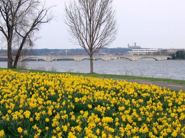 Lady Bird Johnson Park, Mount Vernon Trail near Memorial Bridge, Geo Washington Parkway