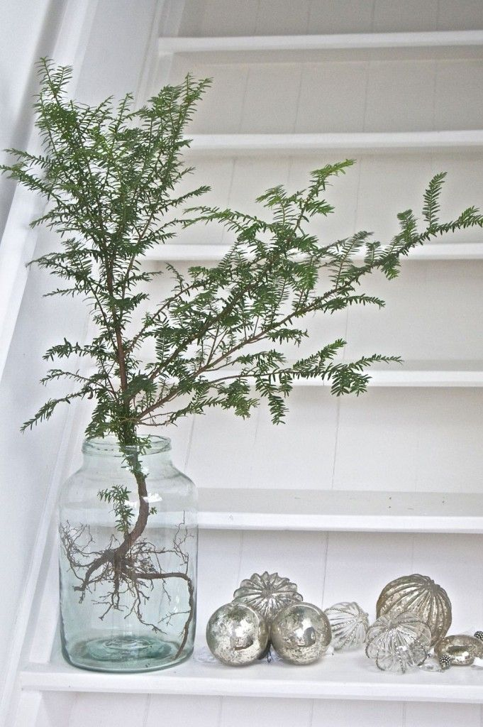 25 einzigartige weihnachtliche pflanzen ideen auf pinterest weihnachtsdeko hauseingang. Black Bedroom Furniture Sets. Home Design Ideas