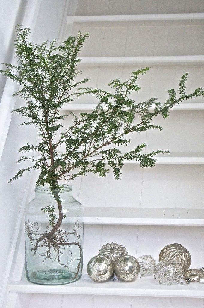 Kleine Tännchen sehen in alten Glasgefäßen besonders dekorativ aus. Man kann sie auf einen kleinen Schemel stellen, auf eine Treppenstufe oder einfach auf den Boden – und sofort verbreitet sich eine winterlich-weihnachtliche Wohlfühlatmosphäre. Wir graben die Bäumchen gerne mit den Wurzeln aus (wirkt originell und ungewöhnlich) und stellen sie in etwas Wasser. So bleiben sie länger frisch und man kann sie später zurück in den Wald bringen.