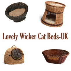 Find This Pin And More On Unique / Unusual Cat Beds By Bestoftheweb.