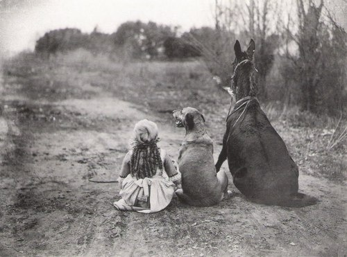 Girl, Dog, Horse....     Meanwhile, back on the farm, one of the kids and Rin Tin Tin meet a horse!