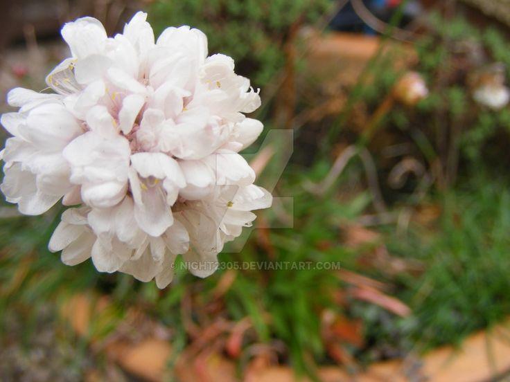 Flower 70 by night2305 on DeviantArt