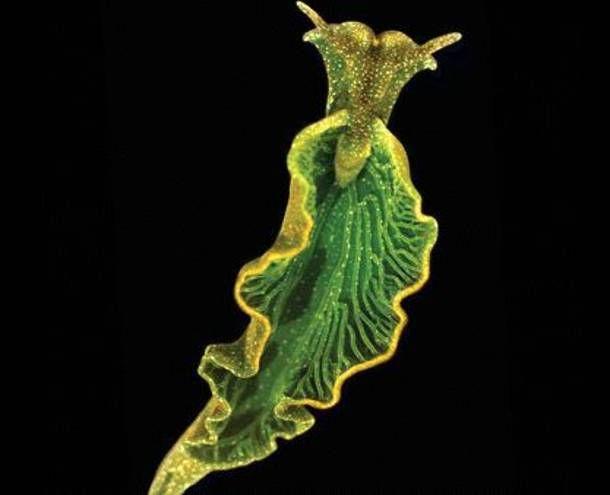 Το e - περιοδικό μας: Υπάρχει θαλάσσιο ζώο με ιδιότητες φυτού