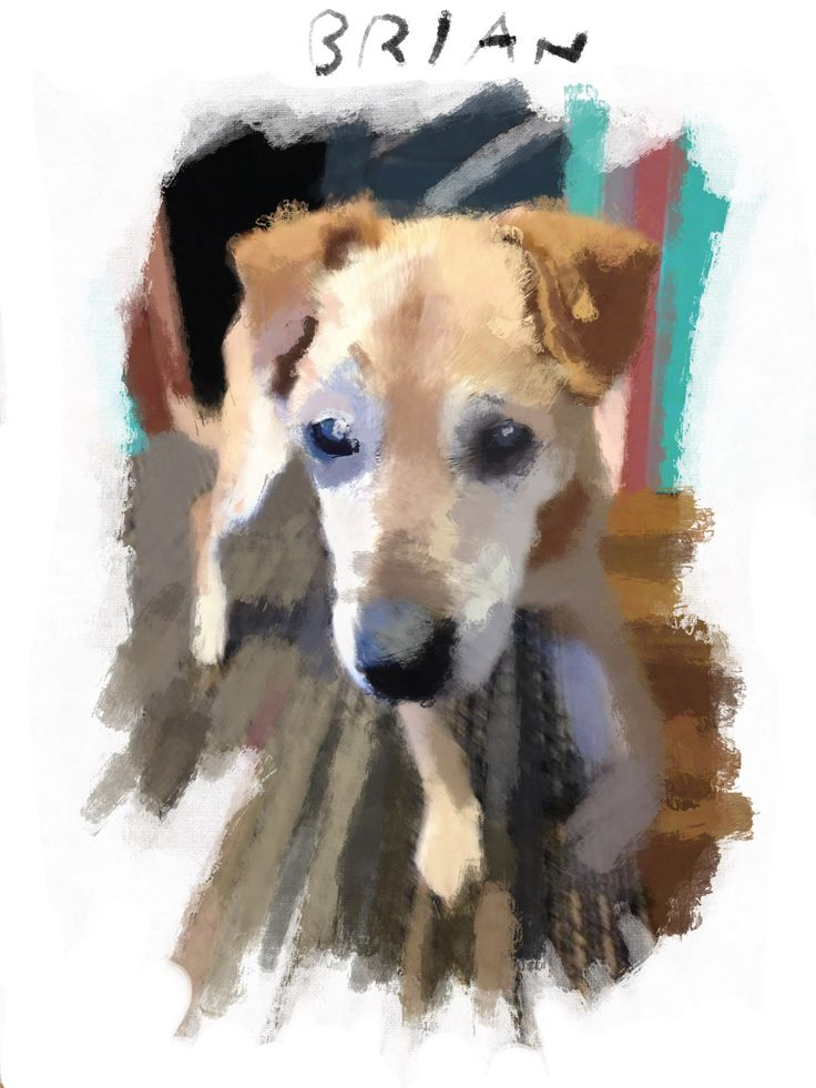 """""""Don't look so glum. You're not alone. Sooner or later, everyone gets the cone."""" -from """"Hounds of Wonder: A Life In Rescue Dogs"""" by B.D. Love. Illustration by Walt Taylor."""