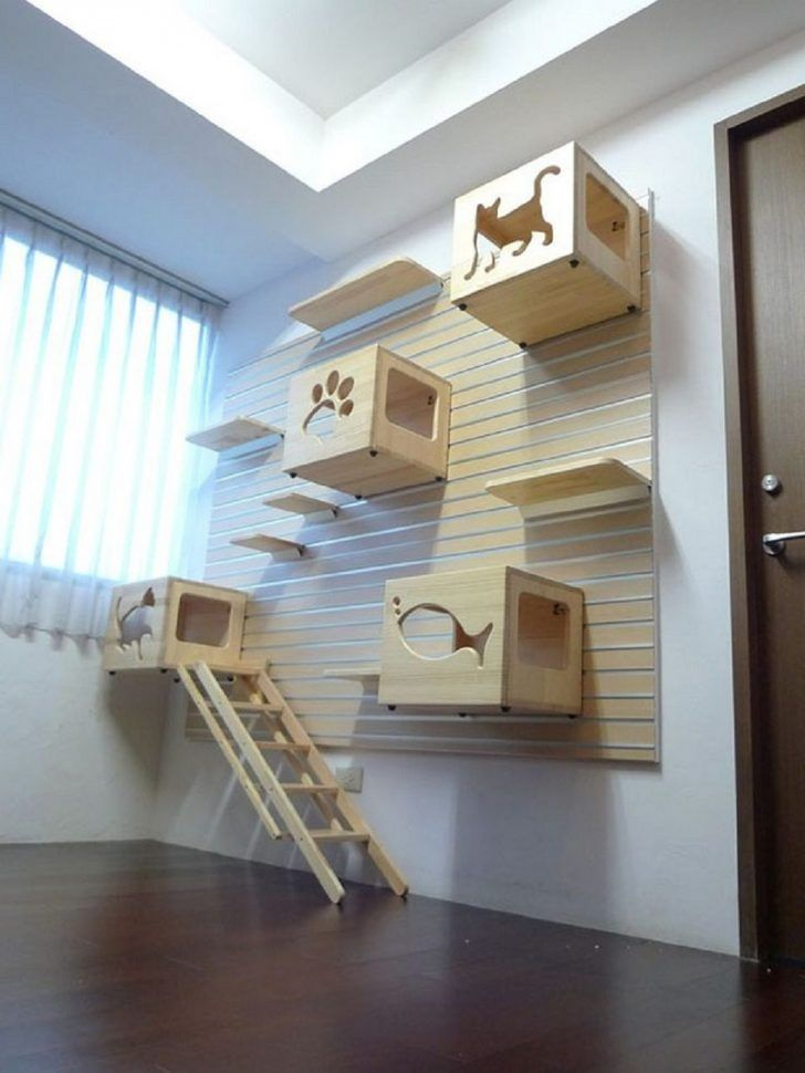 Modular ideas of cat climbing wall and bed boxes with plywood material
