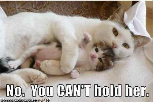 Mine.: Cats, Babies, Animals, Sweet, Mothers, Pets, Kittens, Kitty