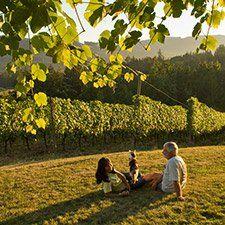 Blue Grouse Estate Winery (Andrea Johnson photo), Vancouver Island, BC Canada