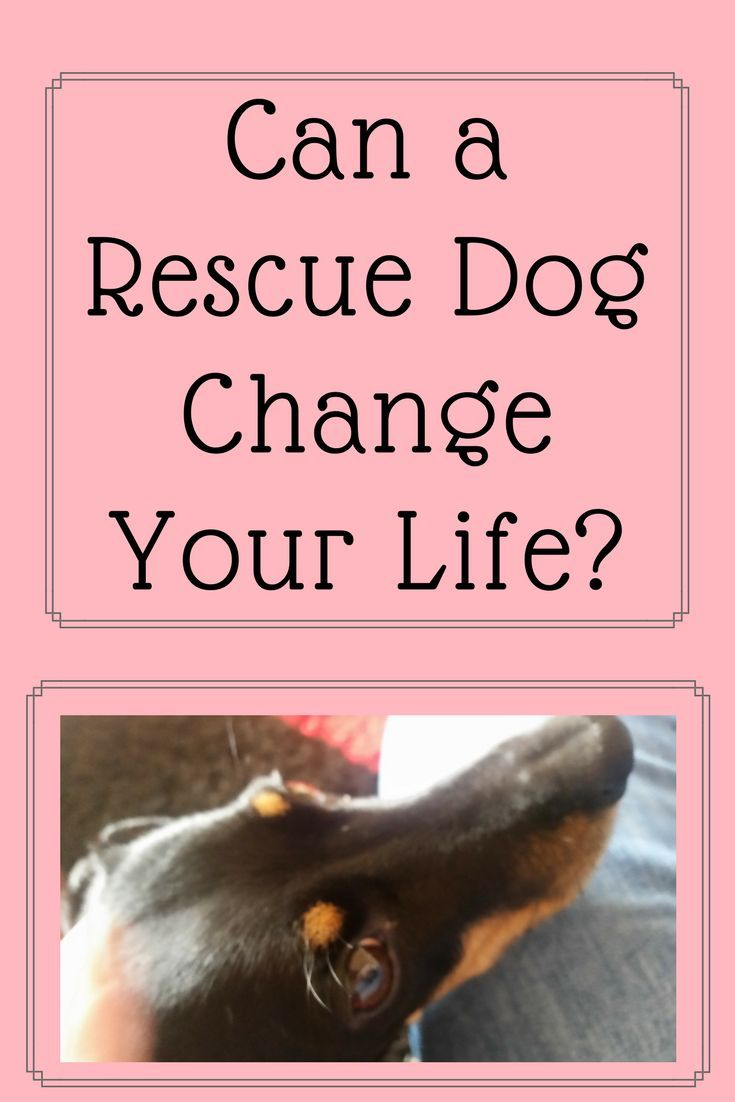 Can a rescue dog change your life?