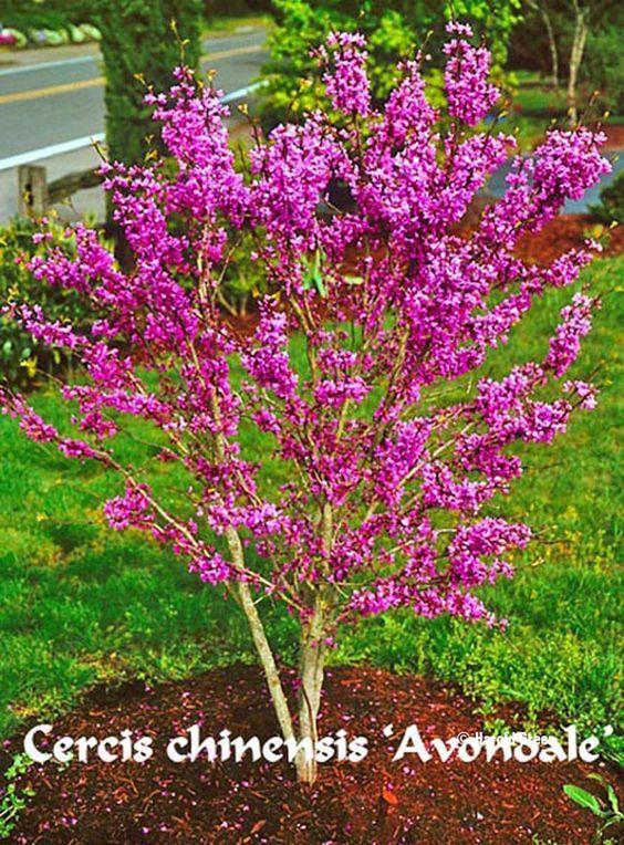 Landscape Garden Avondale : Best images about garden trees small landscape on