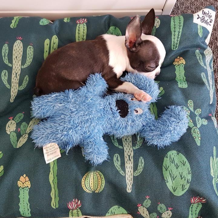 Pin on Cactus Design Pet Bed & Accessories