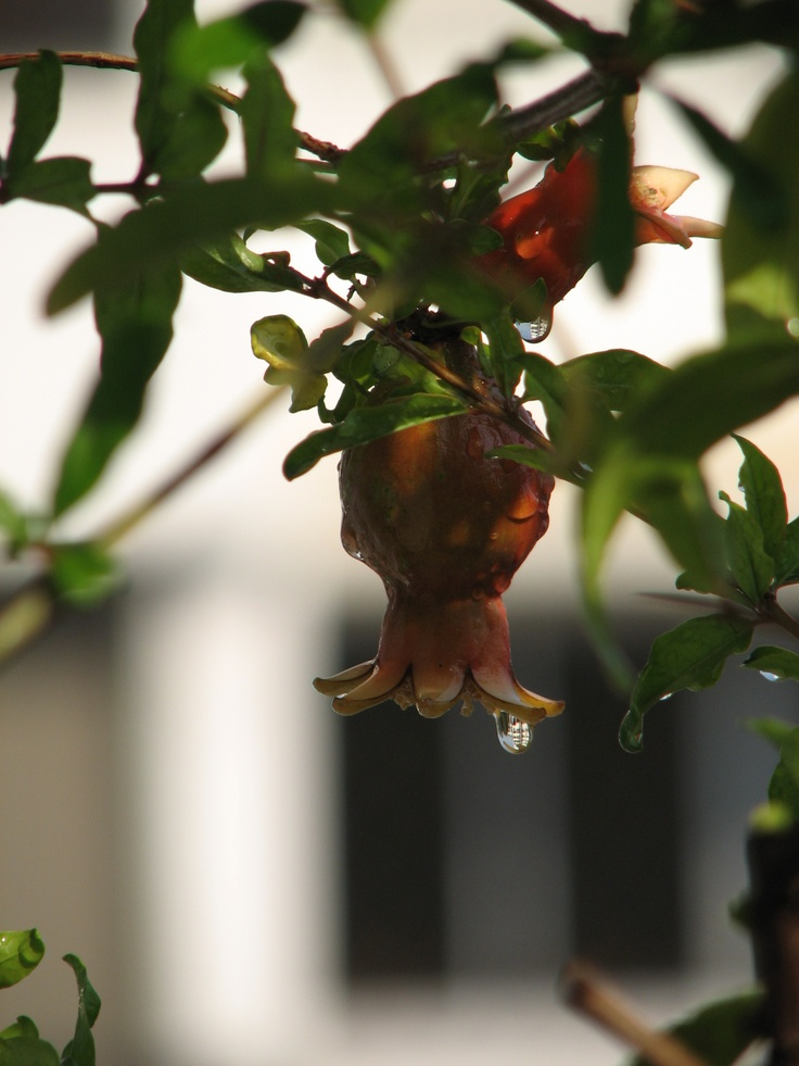 Prismatic Pomegranates