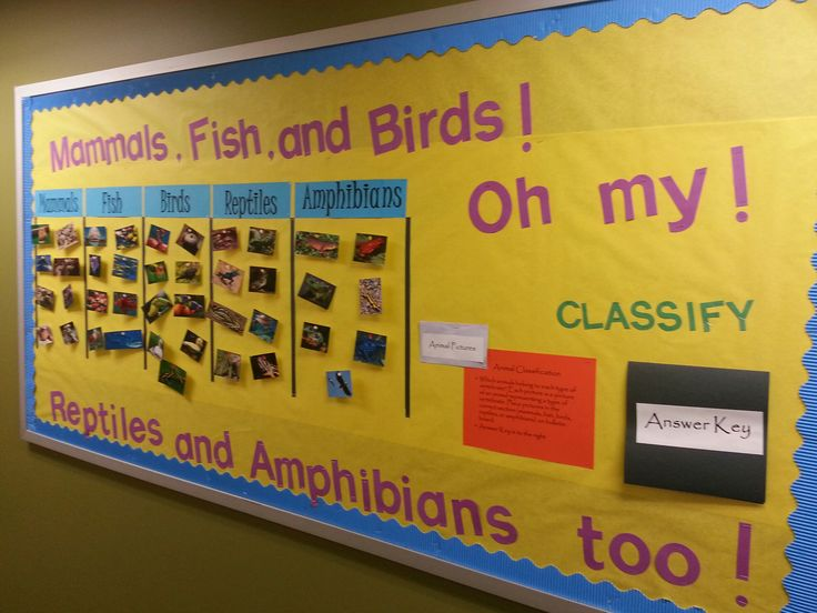 Bulletin Board for Animal Classification! Students take pictures of animals and put them into the correct category of vertebrate. created by kristenwalker