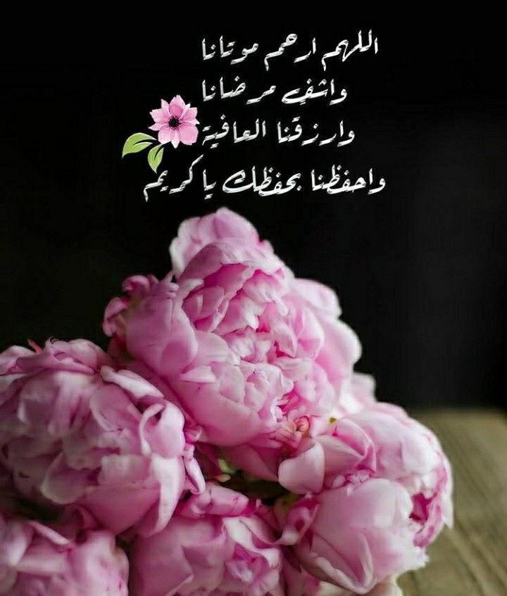 Pin By Juvi On Arebic Rose Duaa Islam Flowers