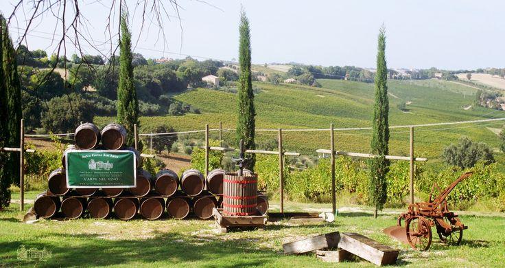 Azienda Vinicola - Antica Cantina Sant Amico