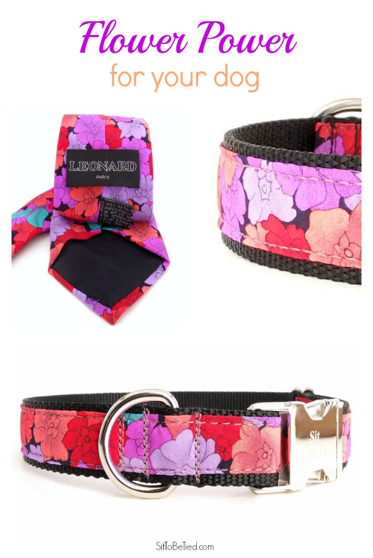 124 best collars for female dogs images on pinterest dog collars black and purple dog collar flower dog collar in black purple red and coral created from a silk necktie dhlflorist Choice Image