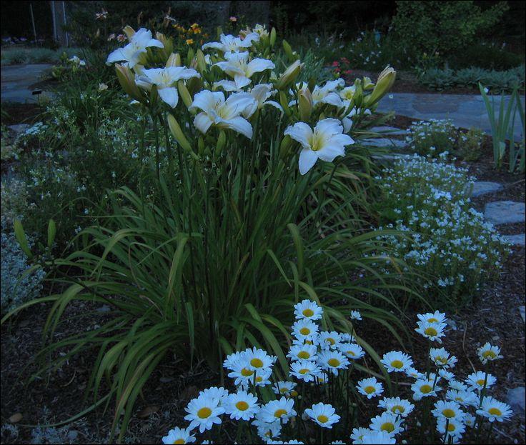 175 Best Moon Garden Images On Pinterest | Moon Garden, White Gardens And  White Flowers