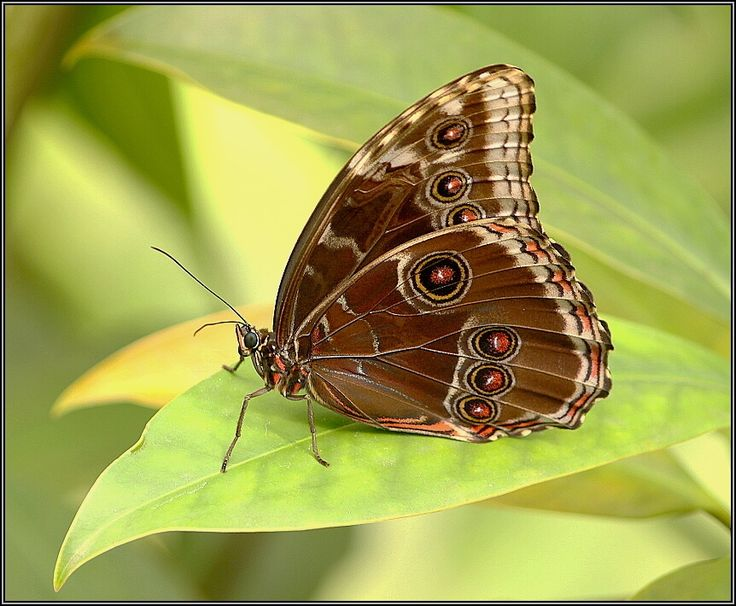 .Fly Things, Healthy Animal, Nature, Awesome Pin, Funny Animal, Fly Fly, Amazing Pin, Favourite Pin, Beautiful Moth