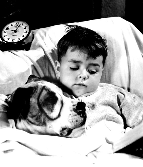 """George """"Spanky"""" McFarland (1928 - 1993) and Pete the Pup - 'Little Rascals', 1930's."""