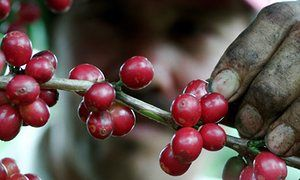 Coffee prices expected to rise as a result of poor harvests and growing demand
