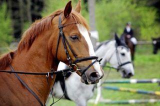 Lago di Garda | Equitazione  #Equitazione #LagodiGarda #LakeGarda #Gardasee