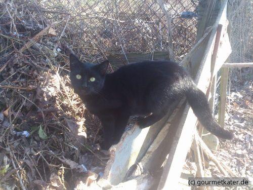Katze Morle #katze #cat