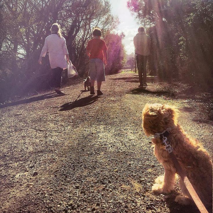 Family walks  #chalmingscoutsimpson #warrnambool #love3280 #lakepertobe #exercise by blondeloise