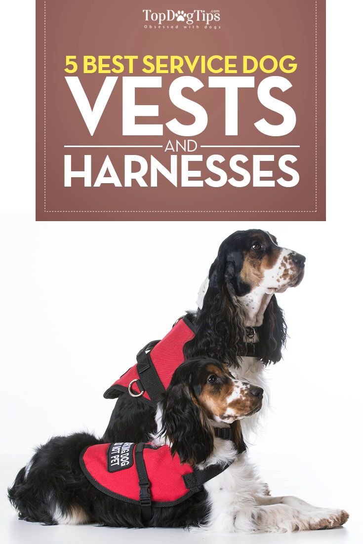 Top 5 Best Service Dog Vests and Harnesses for Working Dogs (2016). Finding the best service dog vests or a dog harness for service dogs that are fit for purpose is a must for the safety of the dog, handler and the general public. Comfort, strength, durab http://www.99wtf.net/category/trends/