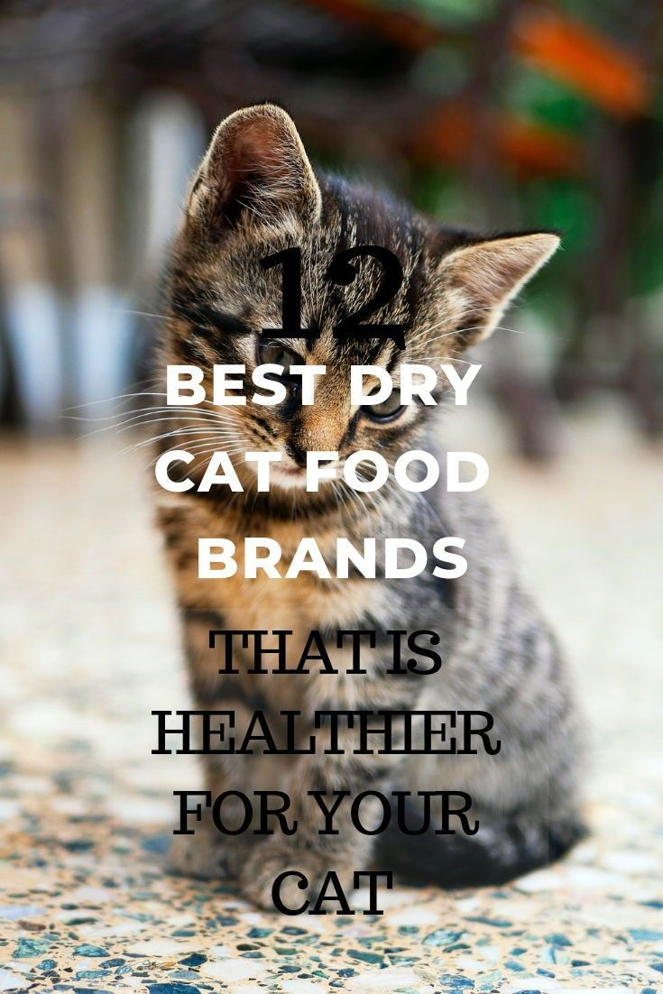 As A Cat Owner You Want Your Cat To Have The Best Diet Ever In This Article I Discuss How To Ensure That Your Ca Cat Food Brands Healthy Cat Food