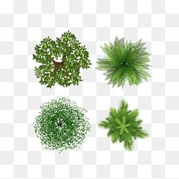 The Trees Trees Tree Combination Map Plant Png Transparent Clipart Image And Psd File For Free Download Free Watercolor Flowers Trees Top View Palm Trees Painting