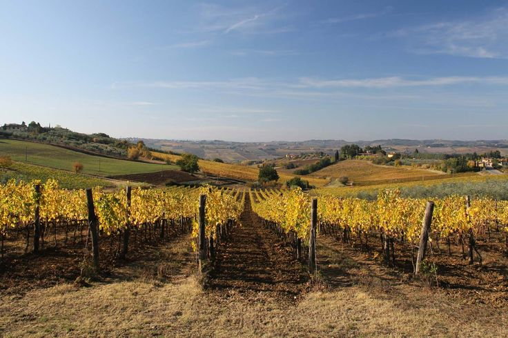 Discover the aroma of Chianti Classico through an exclusive vineyards tour and wine tasting at Fattoria San Michele. And don't forget the delicious cured meats from the Cinta Senese area!