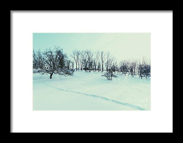 Winter Landscape With Snow And Trees After Blizzard Framed Print