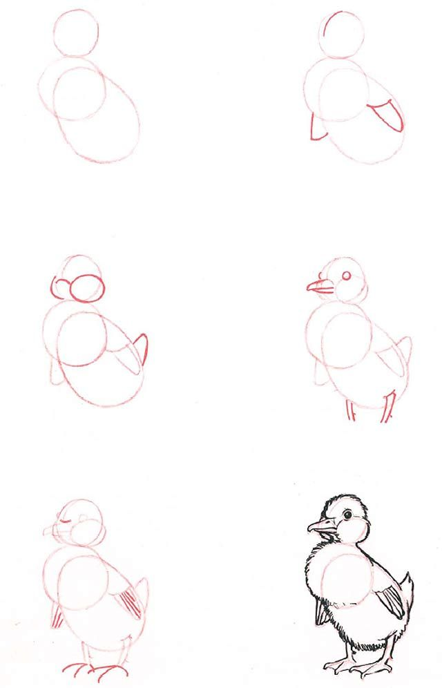 how to draw a duckling