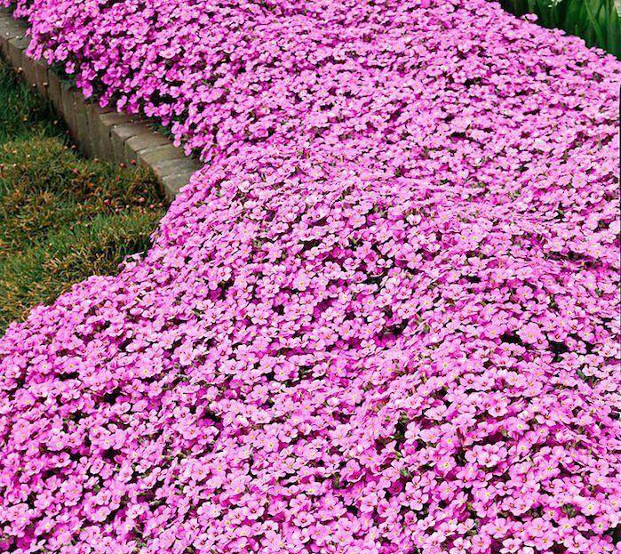 Les 25 meilleures id es concernant couvre sol sur for Solde plante exterieur