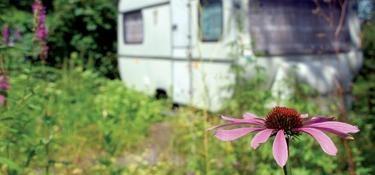 #kamperen in het NoordHollands #Duinreservaat