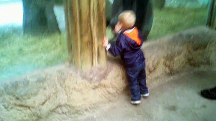 Este niño y este bebé gorila se lo pasan en grande jugando al escondite.